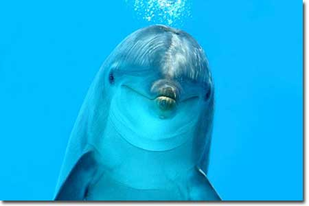 """""""Imagine all the dolphins, eating all the fish... oo-oo..."""""""